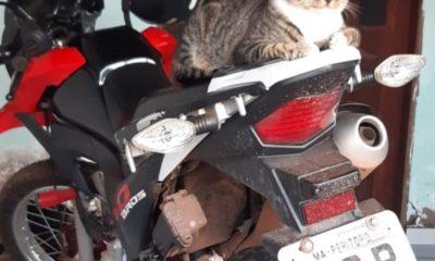 O peritoroense Raimundo Rodrigues Dourado, mais conhecido como Gago, teve sua moto roubada na manhã da última terça-feira (27).