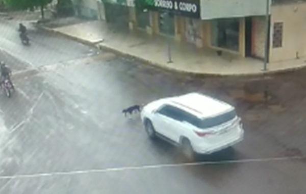 O animal atravessava um cruzamento quando foi atropelado de forma cruel. As imagens foram registradas por uma câmera de monitoramento.